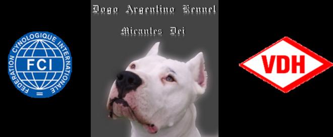 Dogo Argentino Kennel Micantes Dei Startseite